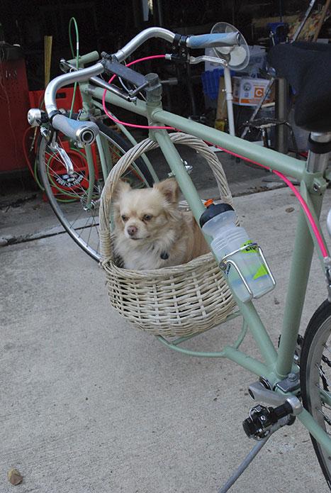 Caesar on Cargo Bike